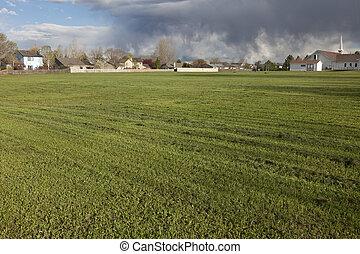 campo, erba, frescamente, falciare