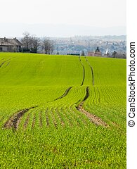 Fields - Agricultural filed near a village, shallow DoF