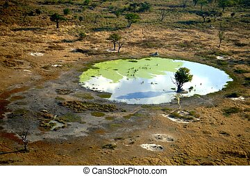 Tree in a pool in Okavango Delta, Kalahari desert,...