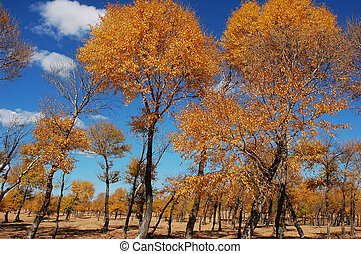 Landscape of golden trees in autumn