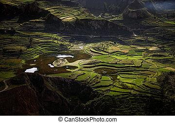 Terraces in Colca Canyon, Peru - Terraces in Colca Canyon en...