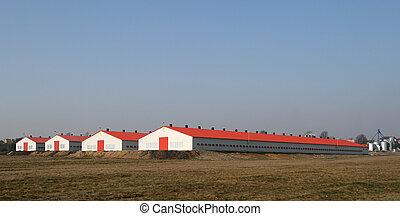 Modern poultry farms