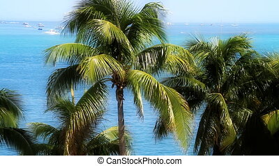 Palm Trees and Boats Florida Keys - Palm Trees and Boats in...