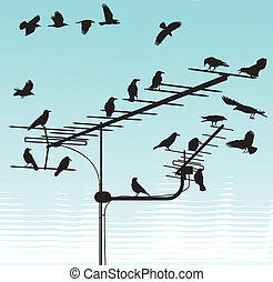 Crows on television aerials - black silhouettes of the crows...