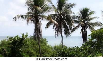 Palm Trees and Ocean View in the Florida Keys