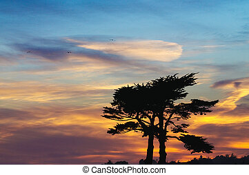 Sunset with a pair of Cypress trees sihouetted against an...
