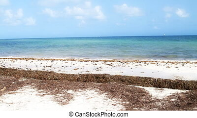 Natural Beach Florida Keys - Natural Beach in the Florida...