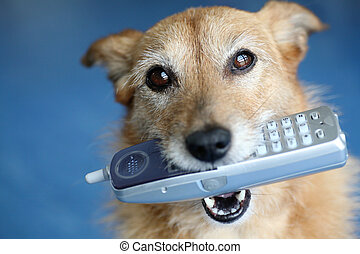 Dog with the telephone in her mouth - Cute scruffy terrier...