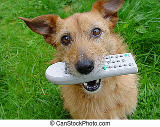 Dog with a remote