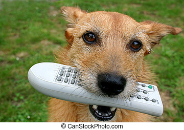 Dog with the remote control