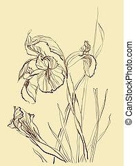 brush drawing iris flower