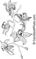 orchid branch vector drawing on white background
