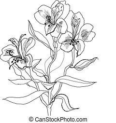 pen drawing alstrameriya flower - Alstrameriya flower pen...