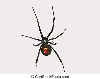 Vector Black Widow Spider - Black widow spider