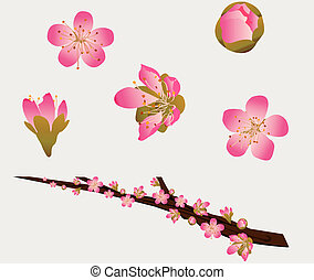 Vector Peach Blossoms and Branch - Peach blossoms and a...