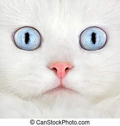 Portrait of a white kitten