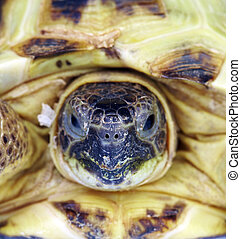 Photo of a turtle close up