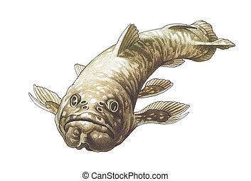Coelacanth. Latimeria. The prehistoric fish who has lived up...