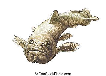 coelacanth,  latimeria