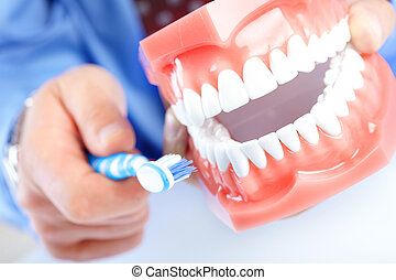Dental model and teethbrush - Dental teeth model and...