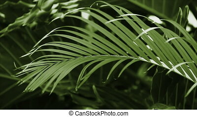 Green Palm in the Breeze Loop HD - Green-toned seamless loop...