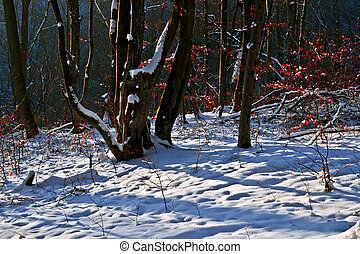 Winter forest 16 - Somewhere in the forests of Jgheabu, near...