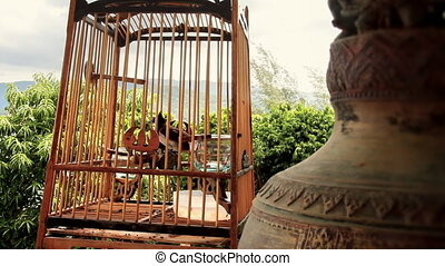 Bird in cage - Birdcage in the Temple