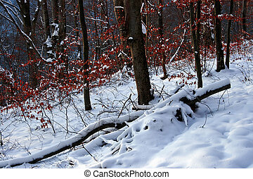 Winter forest 11 - Somewhere in the forests of Jgheabu, near...
