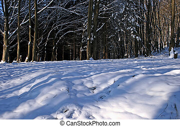 Winter forest 12 - Somewhere in the forests of Jgheabu, near...