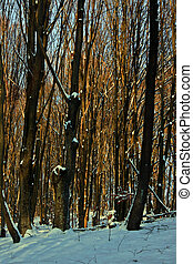 Winter forest 13 - Somewhere in the forests of Jgheabu, near...