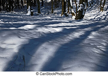 Winter forest 15 - Somewhere in the forests of Jgheabu, near...
