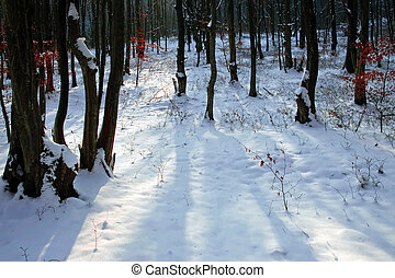 Winter forest 17 - Somewhere in the forests of Jgheabu, near...