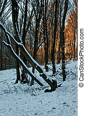 Winter forest 18 - Somewhere in the forests of Jgheabu, near...