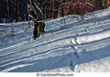 Winter forest 19 - Somewhere in the forests of Jgheabu, near...