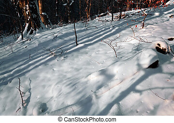 Winter forest 22 - Somewhere in the forests of Jgheabu, near...