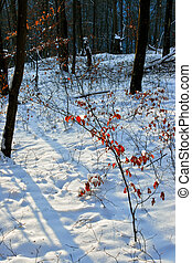 Winter forest 23 - Somewhere in the forests of Jgheabu, near...