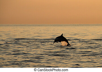Dolphin's jump in sunrise