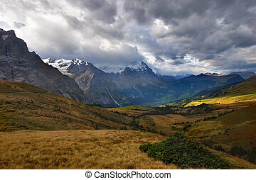 The turned yellow meadow - A meadow highly in the mountains,...