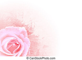 Grunge pink background with rose