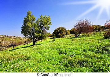 Slope of mountain Meron turning green by a spring grass