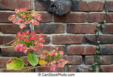 Red Green Hydrangea brick wall