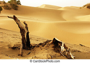 Landscape of deserts - Landscape of dead trees and sandhills...