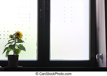 Flowers on a window sill.
