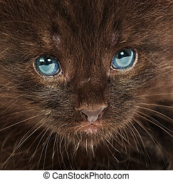 Portrait of a small kitten ...