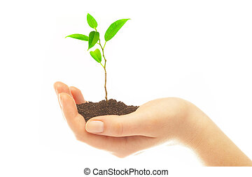 Human hands and young plant - Human hands hold and preserve...