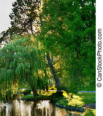 Willow Tree leaning on Spring - Willow Tree with Sunset in...