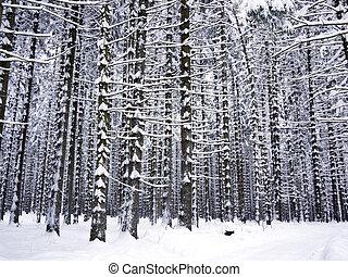 nevado, árvore, troncos