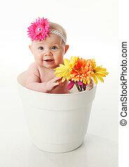 bebé, niña, flor, olla