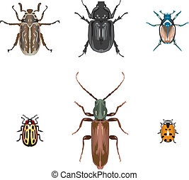 Six vector beetle illustrations