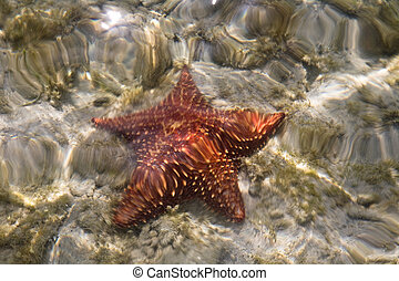 star in sub water bvi 2010